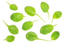 Fresh Baby Spinach Leaves Top View Isolated On White Background.
