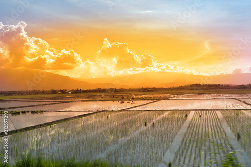 Fotobehang Rijstvelden workers in a paddy field at sunset
