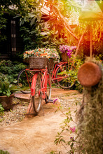 Beautiful Colorful Flowers On Red Bicycle Concept  In The Garden Background