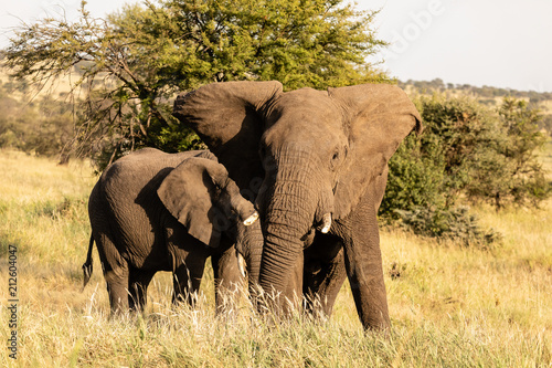 Tuinposter Olifant Elefant