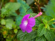 Purple Flower In Blur Background