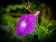 Purple Flower In Blur Background,low Key
