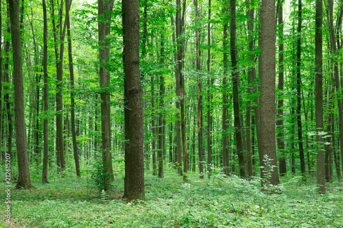 Papiers peints Forets Forest trees. nature green wood sunlight backgrounds