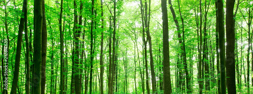 Foto auf Gartenposter Wald forest trees. nature green wood sunlight backgrounds