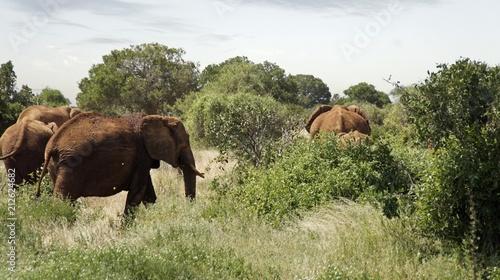 Foto op Plexiglas Leeuw elephants of kenya
