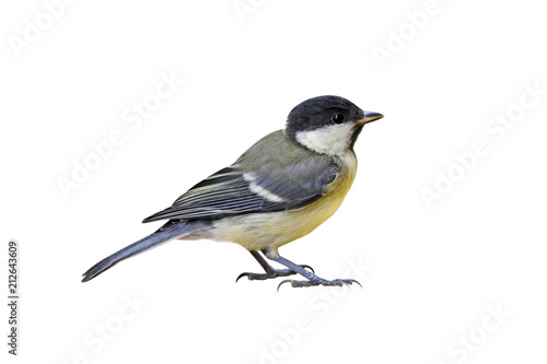 Staande foto Vogel Great tit (Parus major), young, isolated on white background
