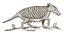 Nine-banded Armadillo (dasypus...