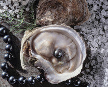 Oyster With Beautiful Pearl Op...