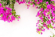 Beautiful Spanish Bougainville...