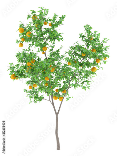 orange tree with oranges isolated on white background