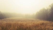 A Sleepy, Foggy, Grassy Meadow In Eastern Iowa