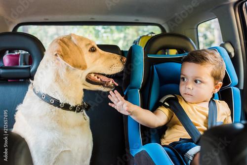 adorable toddler boy in safety seat touching labrador dog on backseat