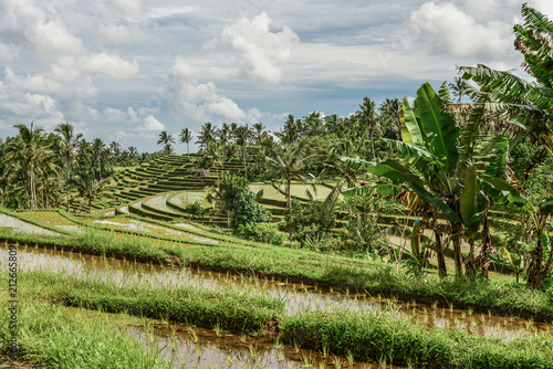 Tuinposter Asia land Green rice fields on Bali island