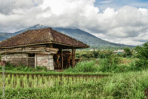 Keuken foto achterwand Asia land Green rice fields on Bali island