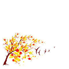 red autumn,flowers tree , on a white