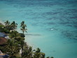 palm trees and tropical clear blue water shore line