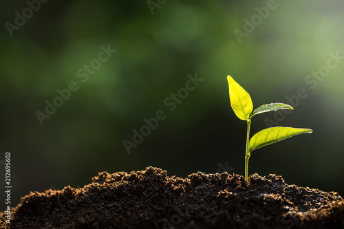 The seedling are growing from the rich soil to the morning sunlight Fototapet