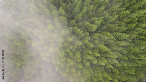 Treetops and Cloudy Forest From Above