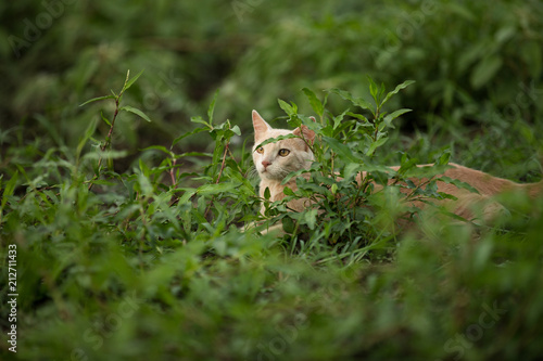Orange shorthair tabby cat climbing and exploring in nature Poster