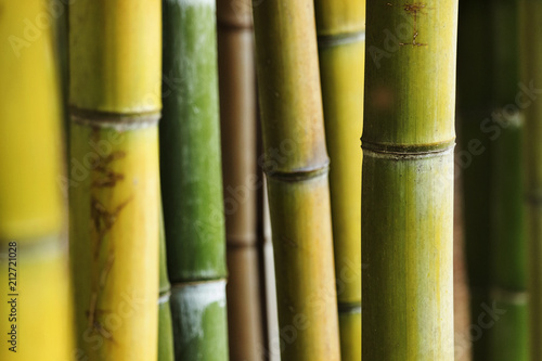 Papiers peints Bambou Bamboo forest