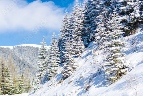 Fotografie, Obraz Winter snow trees