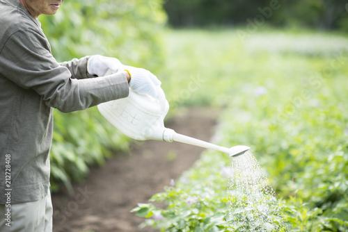 畑で水やりをする手元