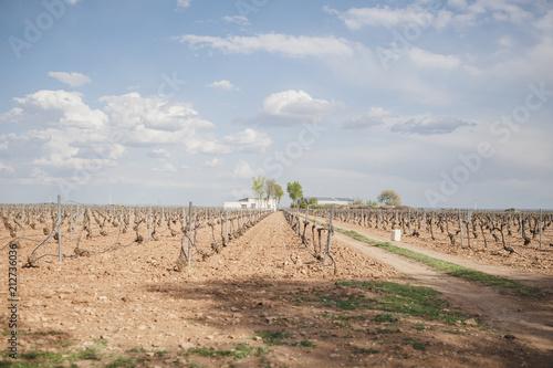 Foto op Aluminium Landschappen Ancient vineyards in Castile Leon, Spain