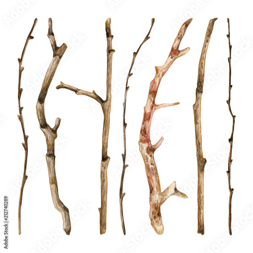 Watercolor hand drawn set of dry tree branches Wall mural