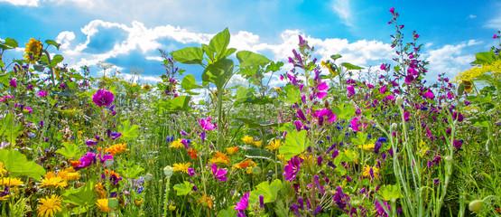 Bunte Bienenweide im Sommer