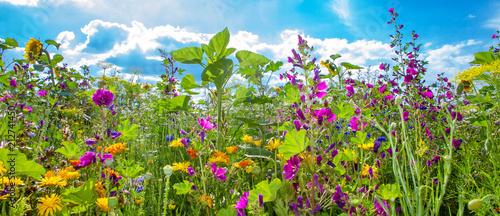 Foto auf Gartenposter Lime grun Bunte Bienenweide im Sommer