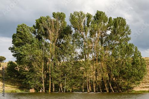 Chopos y aguas del Embalse de La Tabla. Jiménez de Jamuz, León, España. © LFRabanedo