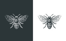 Honey Bee Logo. Hand Drawn Eng...