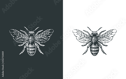 Fotografie, Tablou Honey bee logo. Hand drawn engraving style illustrations.