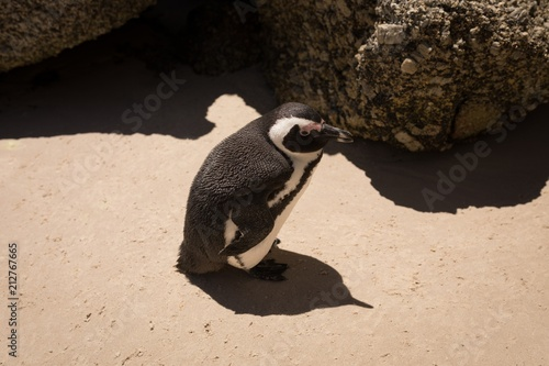 High angle view of penguin at beach