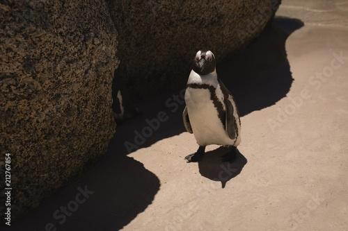 Penguin at beach