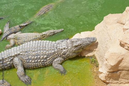 In de dag Krokodil crocodile Park in Morocco