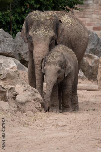 Aluminium Prints Elephant Elephant child and parent