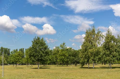 Keuken foto achterwand Bomen landscape in the park