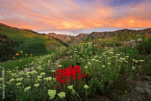 Foto op Canvas Zalm Colorful wildflowers in the Wasatch Mountains, Alta, Utah, USA.