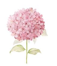 Watercolor Hydrangea Flower Il...