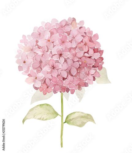 Fotografia Watercolor hydrangea flower illustration