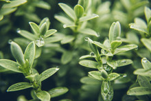 Nature Green Fresh Plant