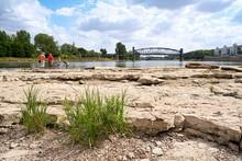 Ufer Des Flusses Elbe Am Domfelsen In Magdeburg Bei Niedrigwasser