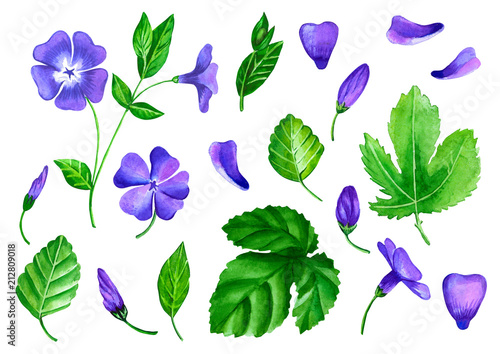 Fotografie, Obraz a set of flowers periwinkle is made in watercolor