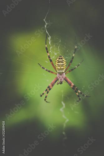 Plakat pająk sam żółty i czarny i czerwony na płótnie z bliska w lecie na zielonym tle