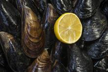 Frische Muscheln