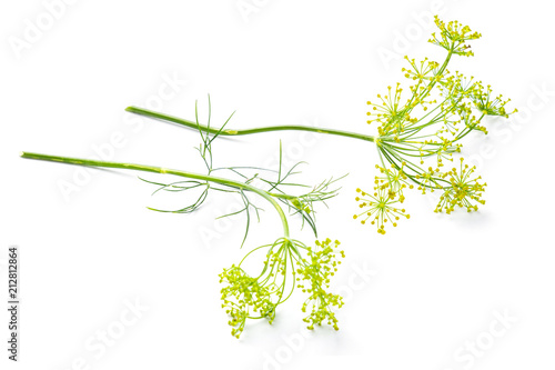 Foto Flowers of the dill