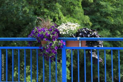 Canvas Print Blumen am Geländer im Topf