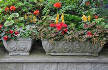 Decorative Stone Flower Planters