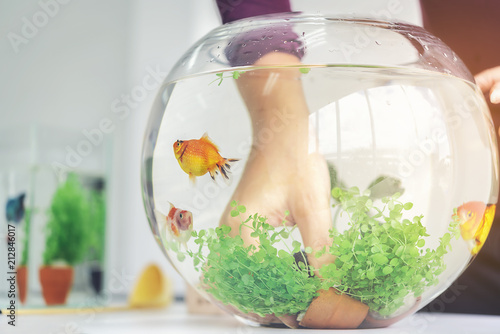 Valokuva  A woman's hand is decorating the aquarium in a fishbowl as a hobby